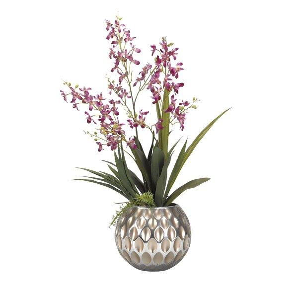 Baby Dendrobium Orchids Floral Arrangement in Glass Vase by Brayden Studio