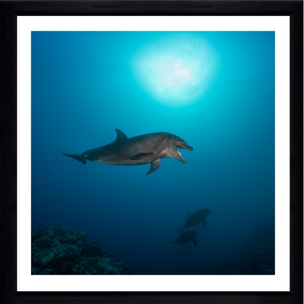 Laughing Dolphin by Craig Dietrich Framed Photographic Print by Picture Perfect International