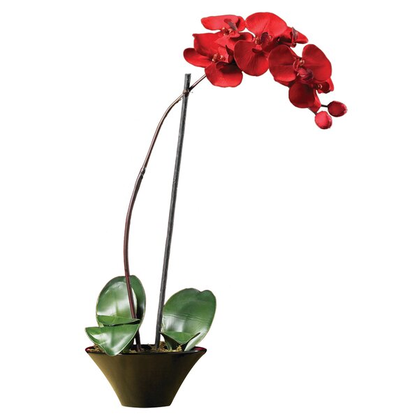 Holiday Phalaenopsis Orchid with Dish by Nearly Natural