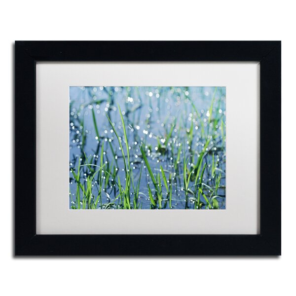 After the Rain by Beata Czyzowska Young Framed Photographic Print by Trademark Fine Art