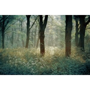 Forest De Tenom' Photographic Print on Canvas by Star Creations