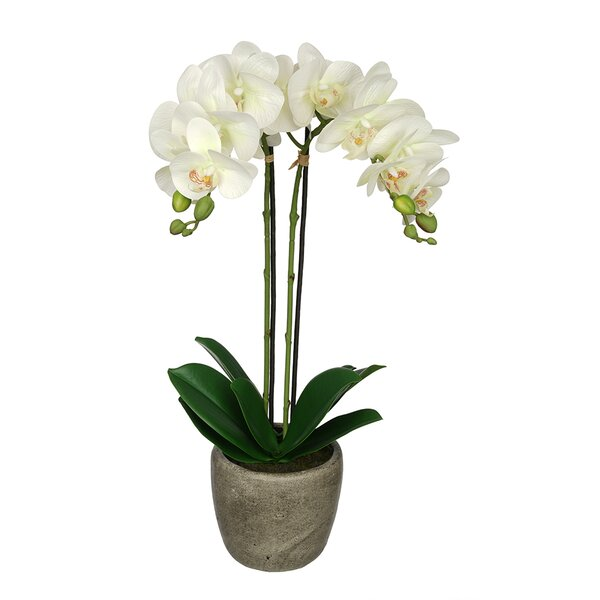 Synthetic Fabric Double-Stem Orchid Floral Arrangement in Pot by Greyleigh