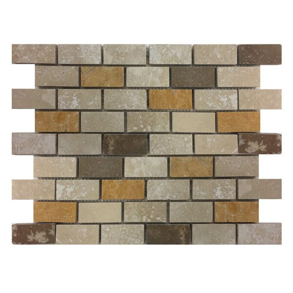 Honed 1 x 2 Natural Stone Mosaic Tile in Gold/Noce by QDI Surfaces