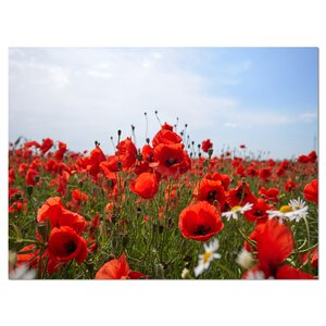 'Red Poppies under Bright Blue Sky' Photographic Print on Wrapped Canvas by Design Art