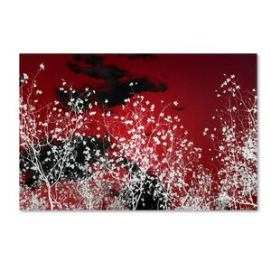 Skyfall by Philippe Sainte-Laudy Photographic Print on Wrapped Canvas by Trademark Fine Art