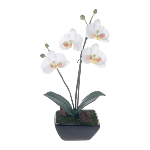 Phalaenopsis Centerpiece with Base by Red Vanilla