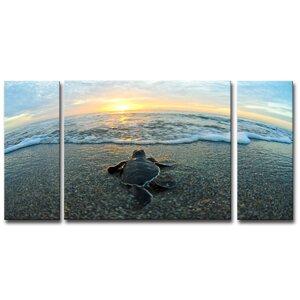 'Turtle' by Chris Doherty 3 Piece Photographic Print on Canvas Set by Ready2hangart