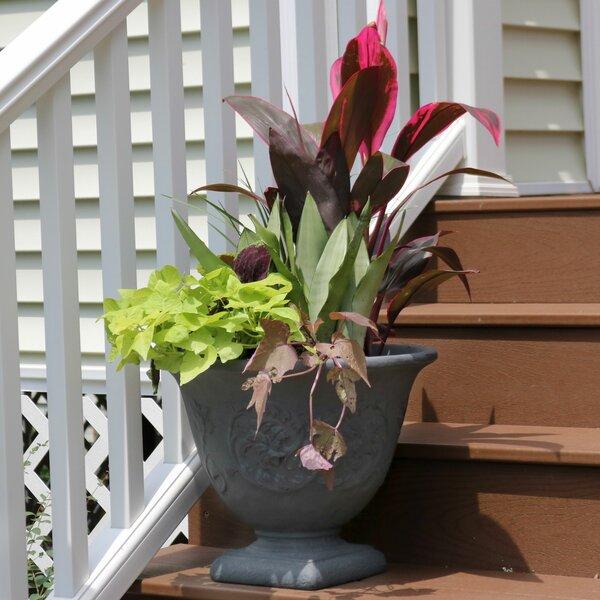 Gray Flower Resin Pot Planter by Winston Porter