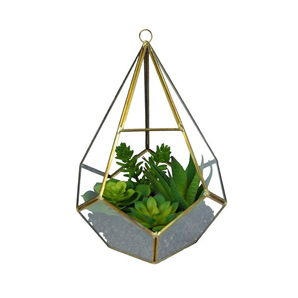 Hanging Succulent Plant in Basket by Wrought Studio