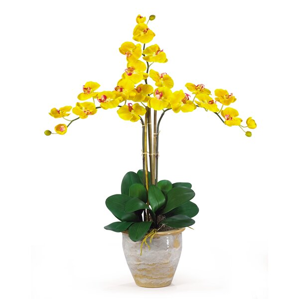 Triple Phalaenopsis Silk Orchid Flowers in Yellow by Nearly Natural