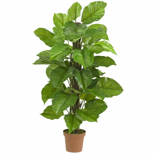Leaf Philodendron Tree in Pot by Bayou Breeze