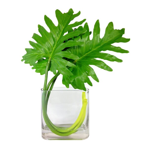 Xanadu Leave Square Desktop Foliage Plant in Vase by Bayou Breeze