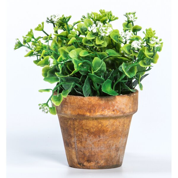 Desktop Flowering Plant in Pot (Set of 2) by Ragon House Collection