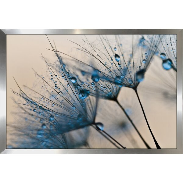 Flower Water Droplets 2 Framed Photographic Print by Picture Perfect International
