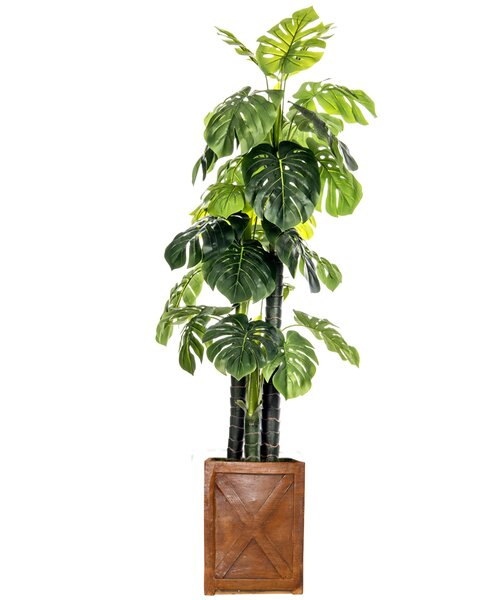 Floor Foliage Monstera Ceriman Tree in Planter by Laura Ashley Home