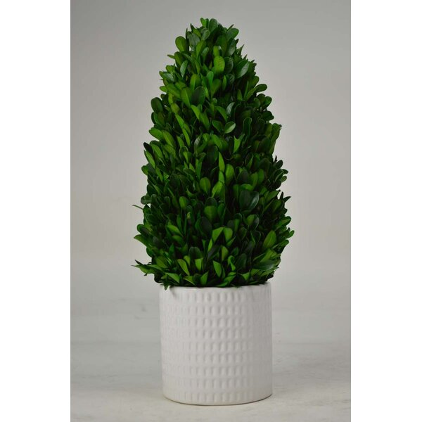 Tower Boxwood Topiary in Planter by GT DIRECT CORP