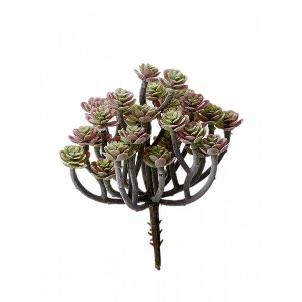 Multicolor Desktop Succulent Mini Tree by Bungalow Rose