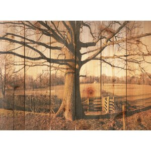 'Big Oak' Photographic Print by Loon Peak