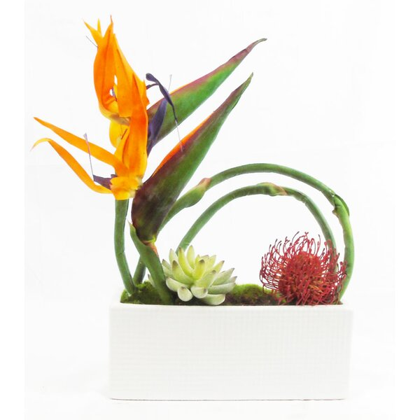 Bird of Paradise for Your Own Personal Paradise Protea/Succulent Floral Arrangement in Planter by Creative Branch