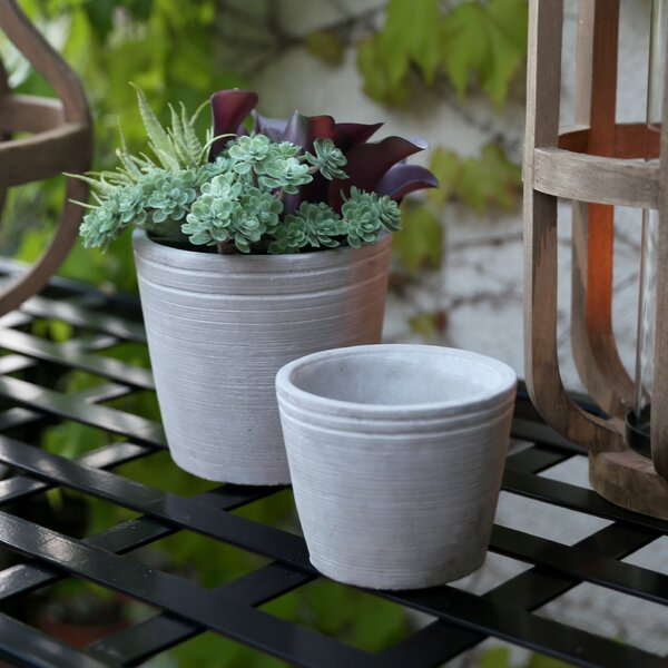 Custis Round Banded Rim Top 2 Piece Cement Pot Planter Set by Williston Forge