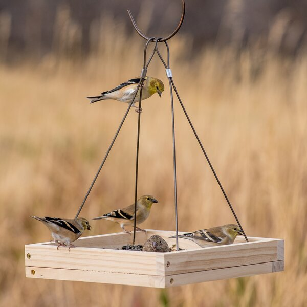 Hanging Tray Bird Feeder by Perky Pet