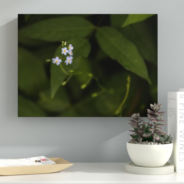 Soft and Delicate Photographic Print on Wrapped Canvas by Latitude Run