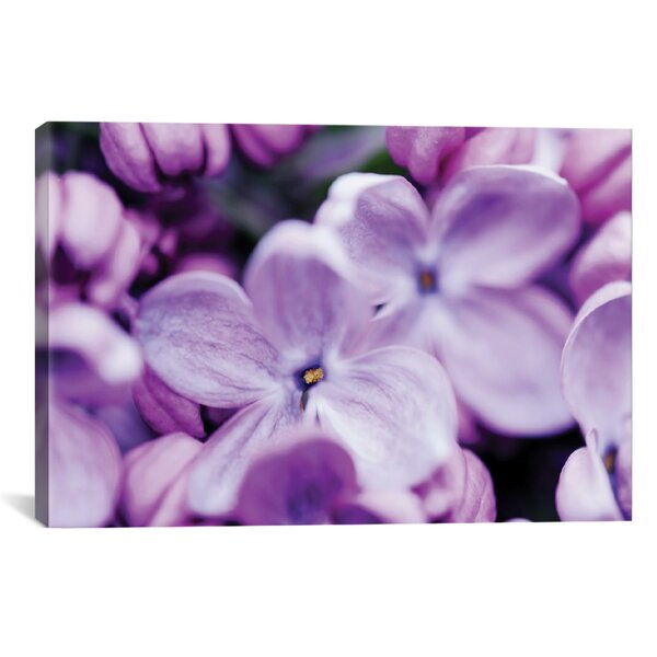 We Found Wonderland Photographic Print on Wrapped Canvas by House of Hampton