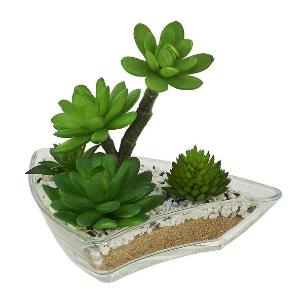 Desktop Succulent Plant in Pot by Red Vanilla