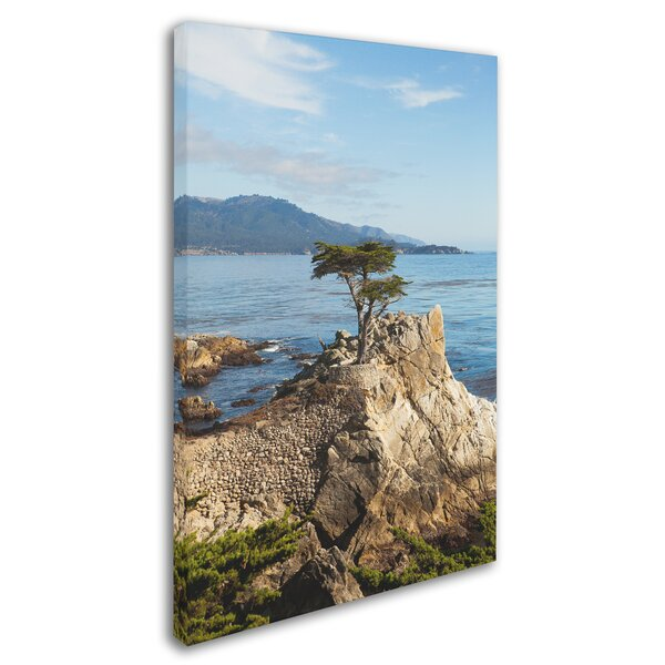 Lone Cypress Tree by Ariane Moshayedi Photographic Print on Wrapped Canvas by Trademark Fine Art