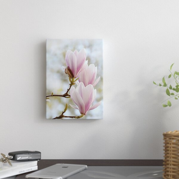 Magnolia Flower Bloom Photographic Print on Wrapped Canvas by East Urban Home
