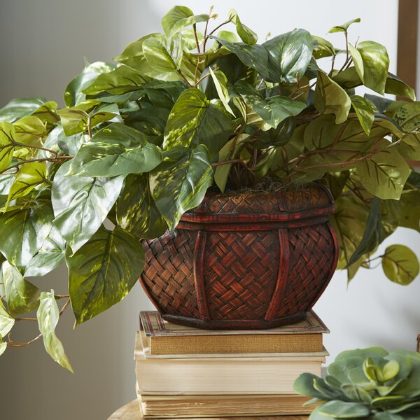 Desk Top Plant in Planter by Beachcrest Home
