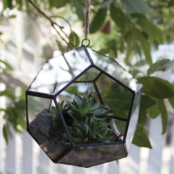 Glass Terrarium by Syndicate Sales
