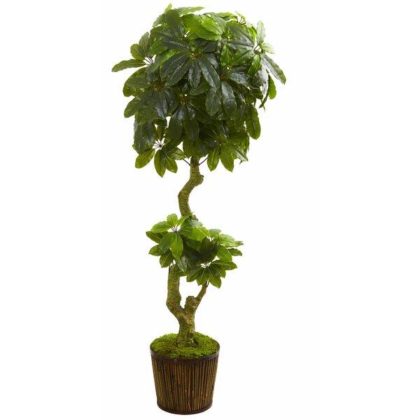Schefflera Floor Foliage Tree in Basket by World Menagerie