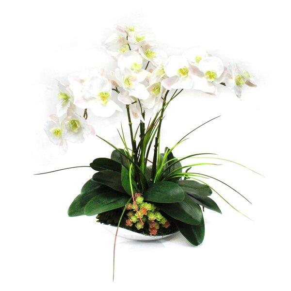Orchids in Bowl by Dalmarko Designs