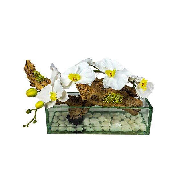Phalaenopsis Aquarium Orchid Floral Arrangement in Vase by Bloomsbury Market