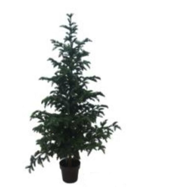 Spruce 78 Floor Ficus Tree in Pot by The Holiday Aisle
