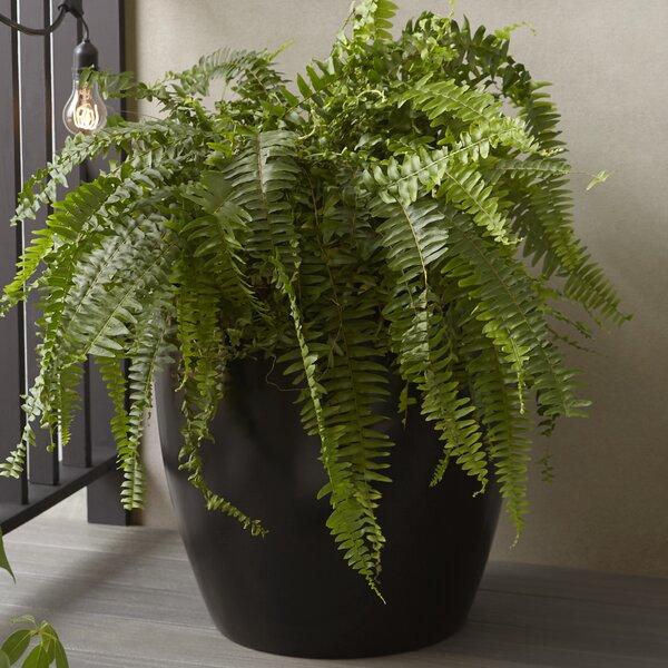 Fahey Fiberglass Pot Planter by Wrought Studio