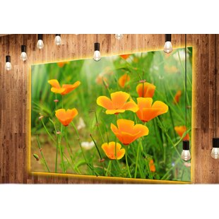 Yellow poppy wayfair bright yellow poppy flowers photographic print on metal mightylinksfo