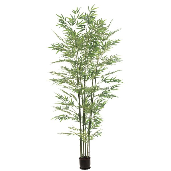Bamboo Tree in Pot by Bloomsbury Market