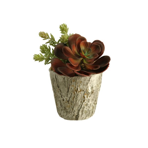 Mixed Floral Arrangement in Planter by Union Rustic
