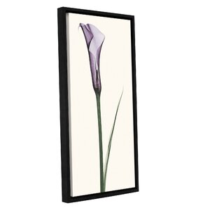 Calla Lily Framed Graphic Art on Wrapped Canvas by Lark Manor