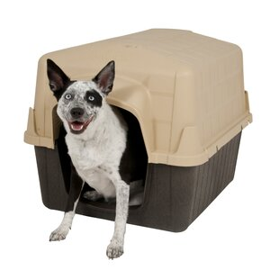 Pet Barn Dog House