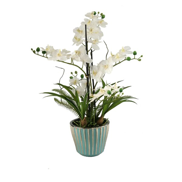 Cream Orchids in Round Teal Ceramic Planter by D & W Silks