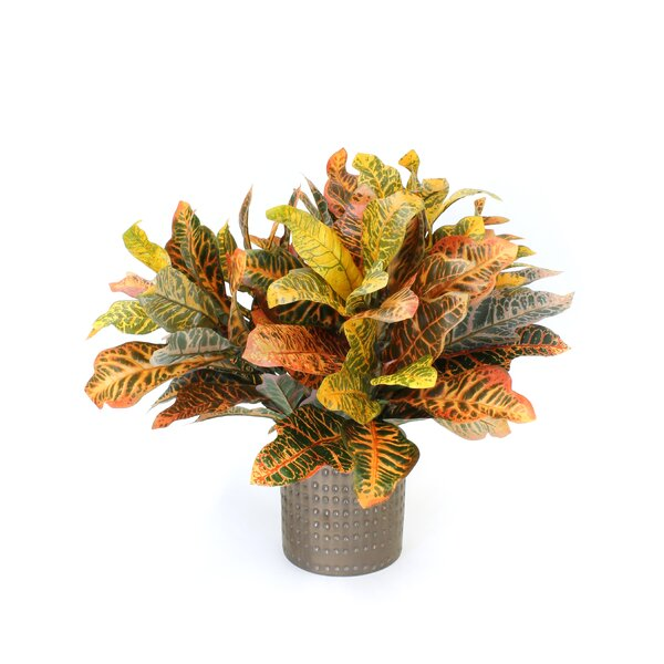Croton Ceramic Cylinder Foliage Plant in Planter by World Menagerie
