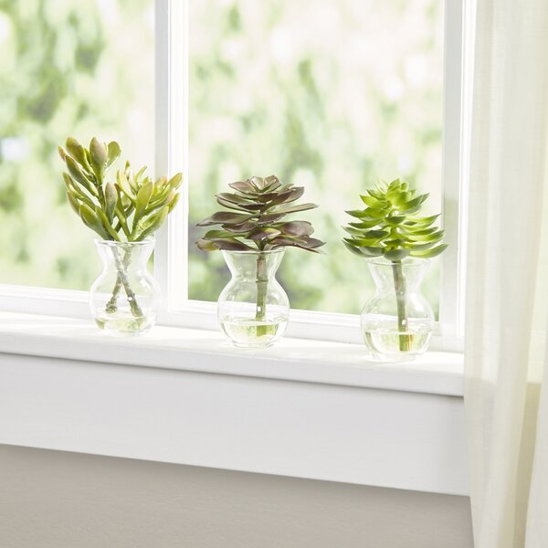 Faux Succulent in Glass Vases (Set of 3) by Birch Lane™