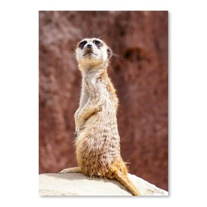 'African Meerkat Animal' Photographic Print by East Urban Home