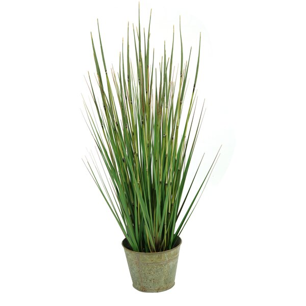 Onion Grass in Round Metal Planter by Gracie Oaks