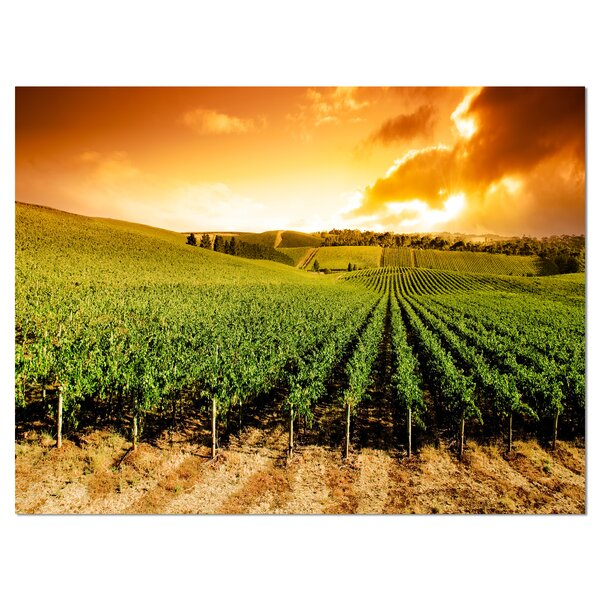 Sunset Vineyard Panorama Photographic Print on Wrapped Canvas by Design Art