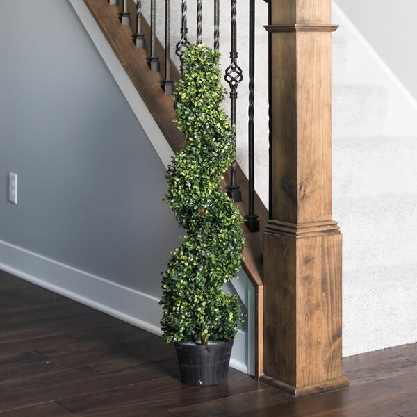 Boxwood Topiary in Pot by Darby Home Co