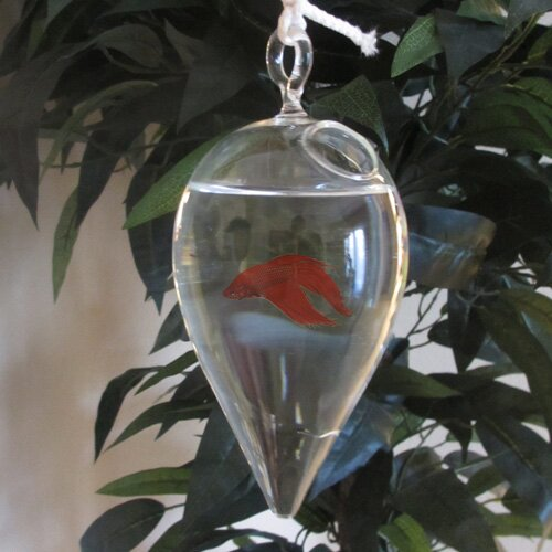 Rex Hanging Glass Aquarium Tank by Tucker Murphy Pet
